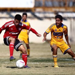 XOLOITZCUINTLES U-17 FALL TO TIGRES